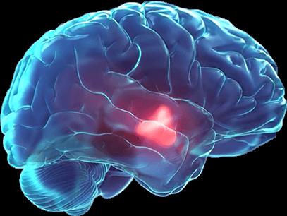 Hypothalamus Homeostatic System